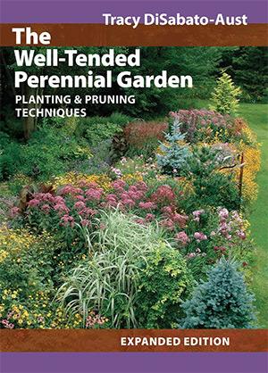 well-tended perennial garden