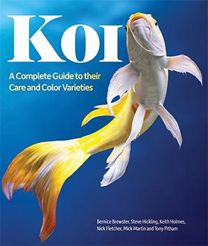 koi complete guide