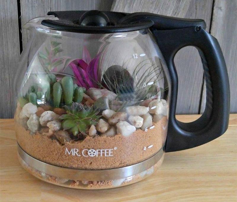 design terrarium coffee pot
